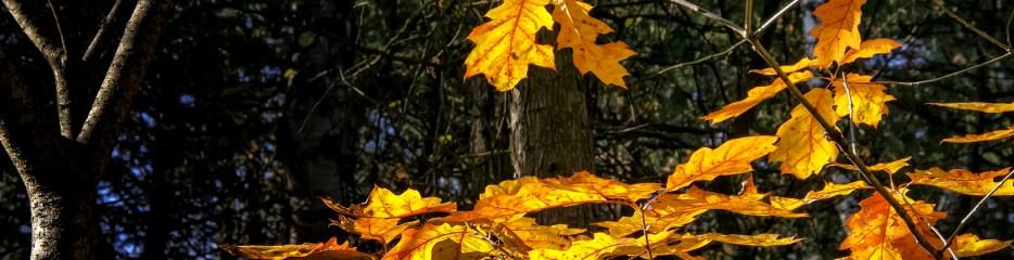 Single Frame: Autumn Close Up #7