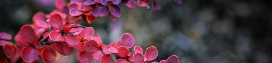 Single Frame: Autumn Close Up #9