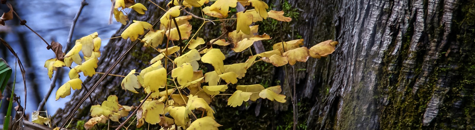 Single Frame: Autumn Close Up #13
