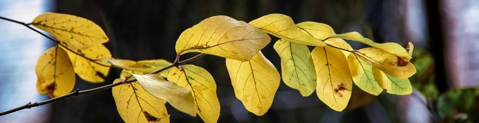 Single Frame: Autumn Close Up #14
