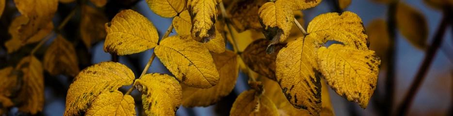 Single Frame: Autumn Close Up #16