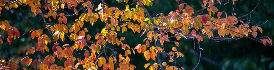Autumn in Grant Park (Set 4 of 4)