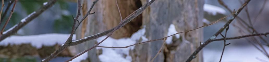 Winter Scenes: Fragile Phenomena (Set 2 of 2)