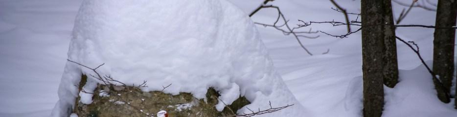 Wordless Wednesday: Snow Puffs???