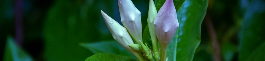Found Flowers (Set 1 of 3): Marvelous Mandevilla