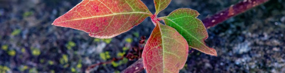 Wordless Wednesday: Four Small Signs of Early Fall