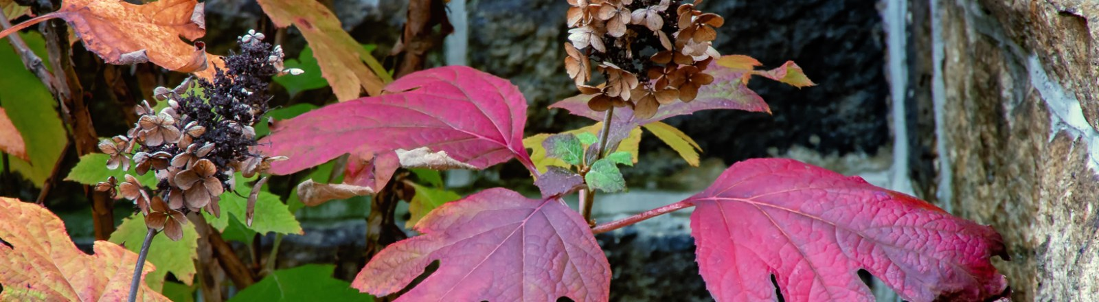 Autumn in Atlanta: Photo Mash-Up #4