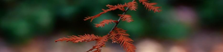 Autumn in Atlanta: Photo Mash-Up #2
