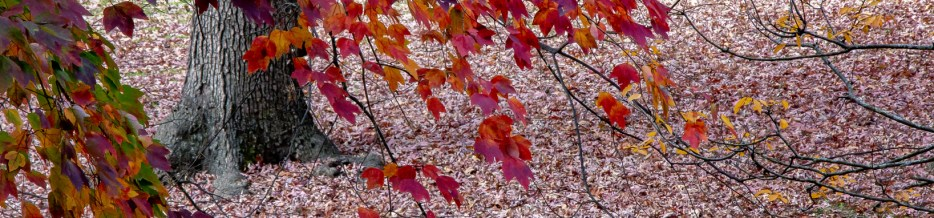 Autumn in Atlanta: Photo Mash-Up #8