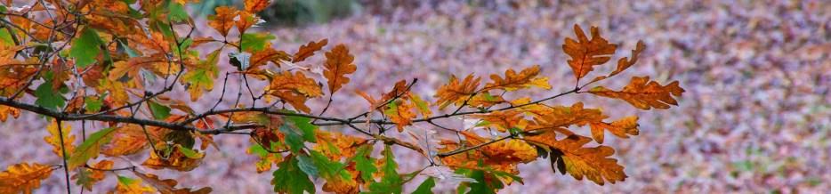 Autumn in Atlanta: Photo Mash-Up #9