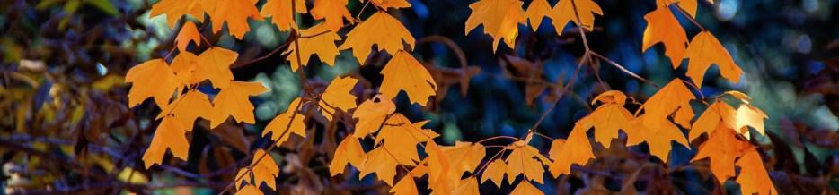 Autumn in Atlanta: Photo Mash-Up #6