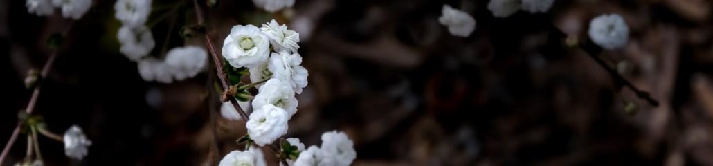 Early Spring: A White Album