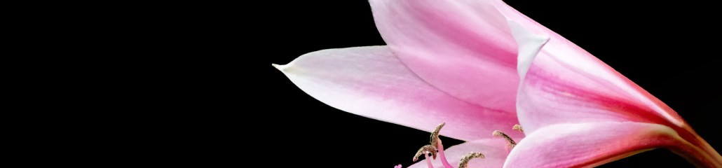Summer 2020: Lily Variations (7 of 10)