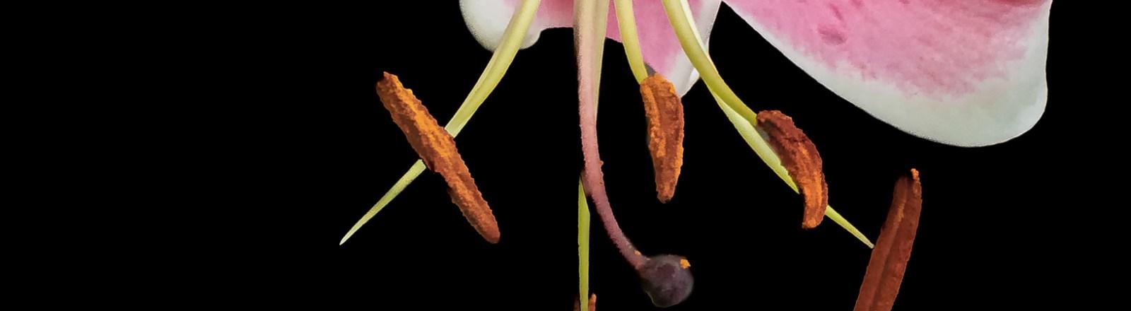 Summer 2020: Lily Variations (10 of 10)