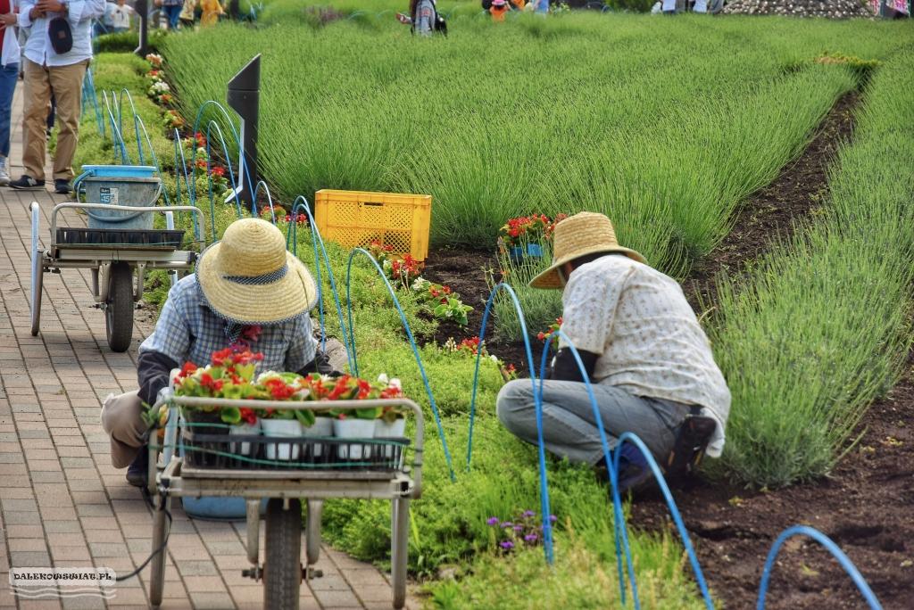 Rolnicy Kawaguchiko