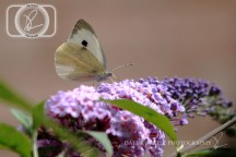 Butterfly_28-07-14_IMG_7984