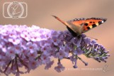 Butterfly_28-07-14_IMG_8001