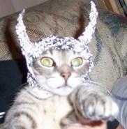 DF Cat