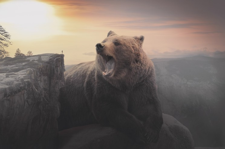 Don't provoke the big bear. Are massive share accounts the real winners of the Instagram game?