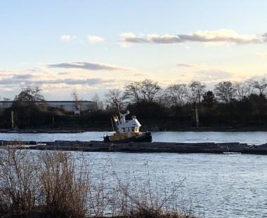 A tub boat pushing logs down a river