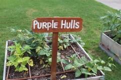 MLK Seedling Garden