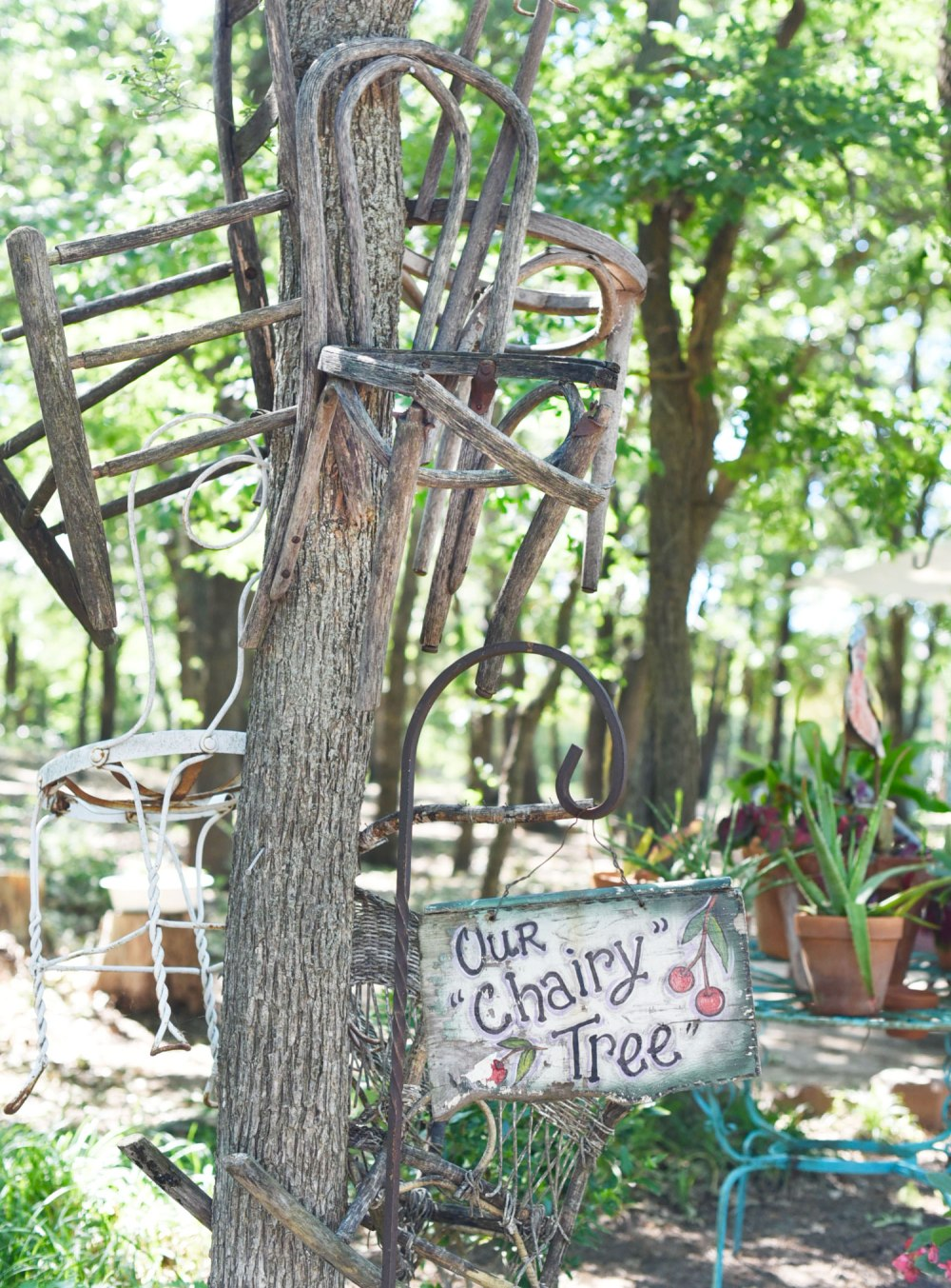 Lavender-Ridge-Farms-Texas-Road-Trip-Outside-Suburbia-Plano-Magazine-3