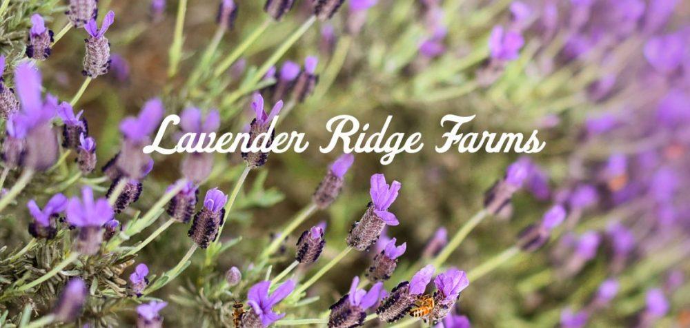 Lavender-Ridge-Farms-Texas-Road-Trip-Outside-Suburbia-Plano-Magazine-feature-1170x557