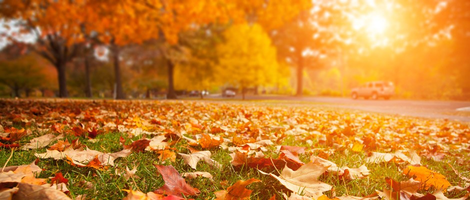 fall-2015-real-estate-update