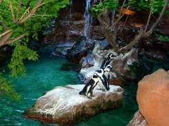 Dallas_World_Aquarium_