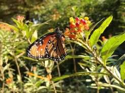 texas_discvoery_garden_credit_fb_page