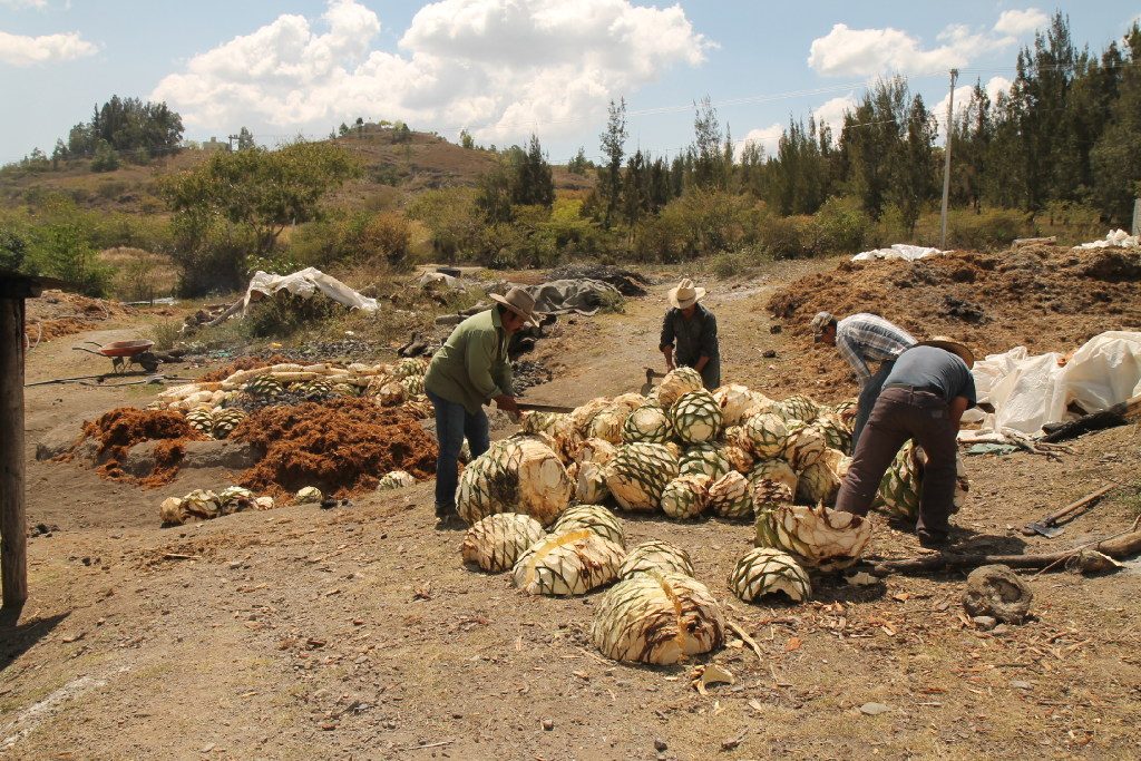 Workers prepare agave hearts for roasting at a mezcal cooperative outside of Oaxaca.(Meredith Bethune)