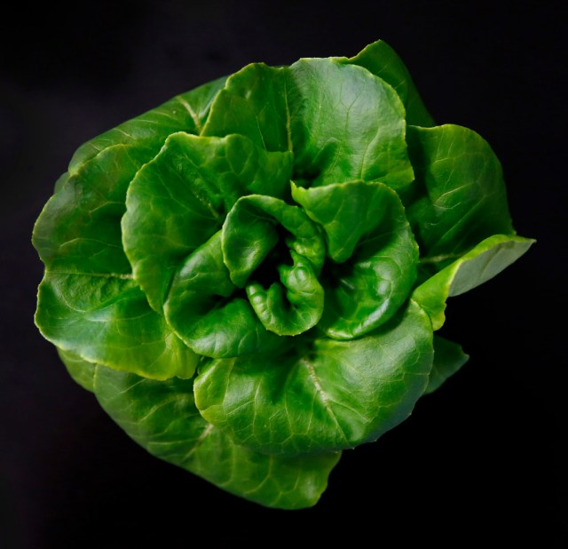 Butter lettuce is harvested inside a vertical farm in the back of the Central Market store in Dallas, Thursday, April 6, 2017. Central Market is trying out indoor growing, and the crops will be sold in the store beginning in May. (Jae S. Lee/The Dallas Morning News)Staff Photographer