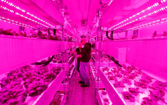 Growers Rebecca Jin (left) and Christopher Pineau tend to plants inside a vertical farm in the back of the Central Market grocery store in Dallas, Thursday, April 6, 2017. Central Market is trying out indoor growing, and the crops will be  sold in the store beginning in May. (Jae S. Lee/The Dallas Morning News)Staff Photographer