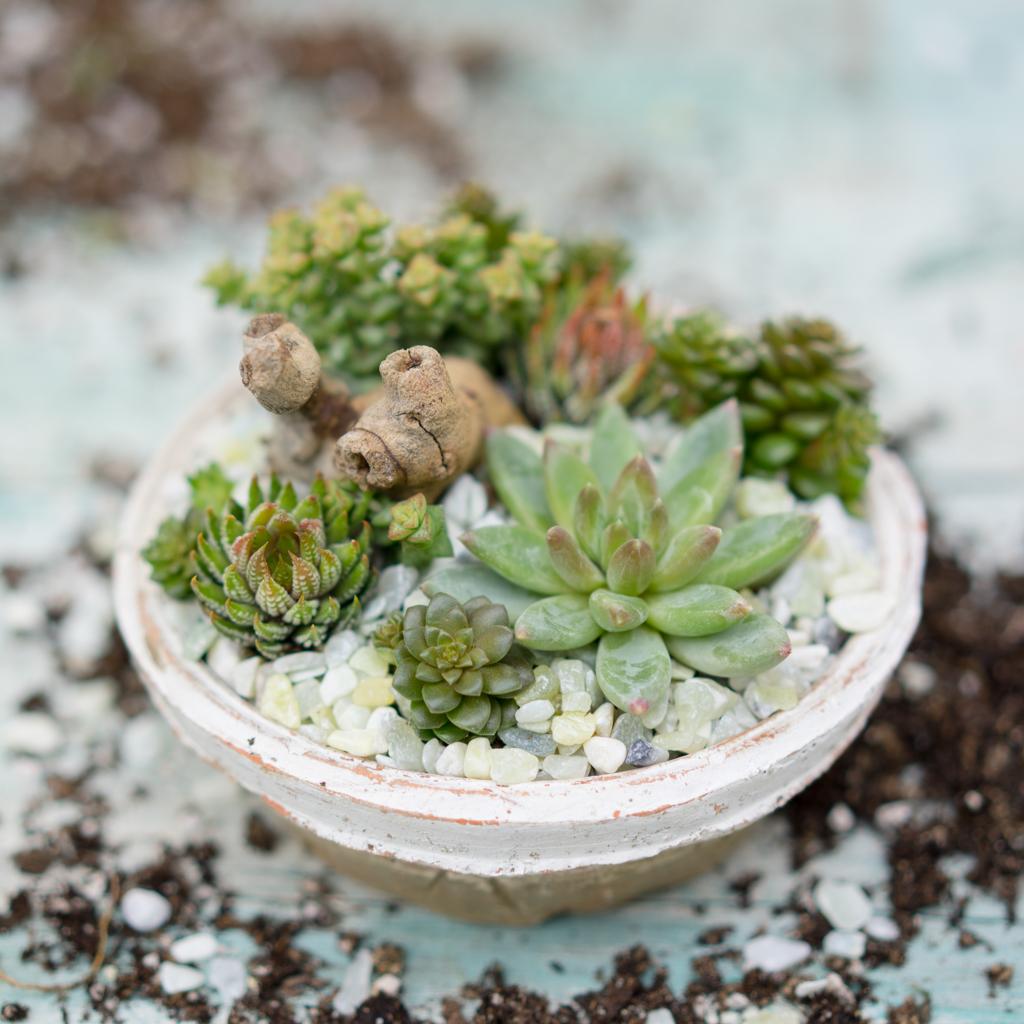 Low Succulent Dish