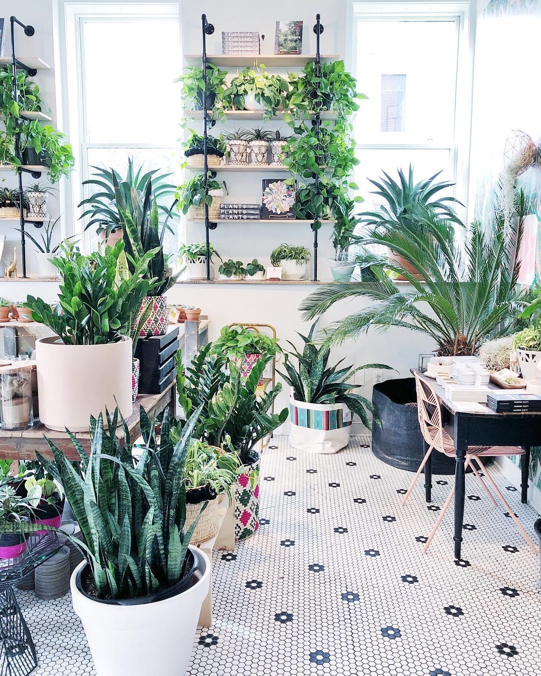Little Leaf Shop