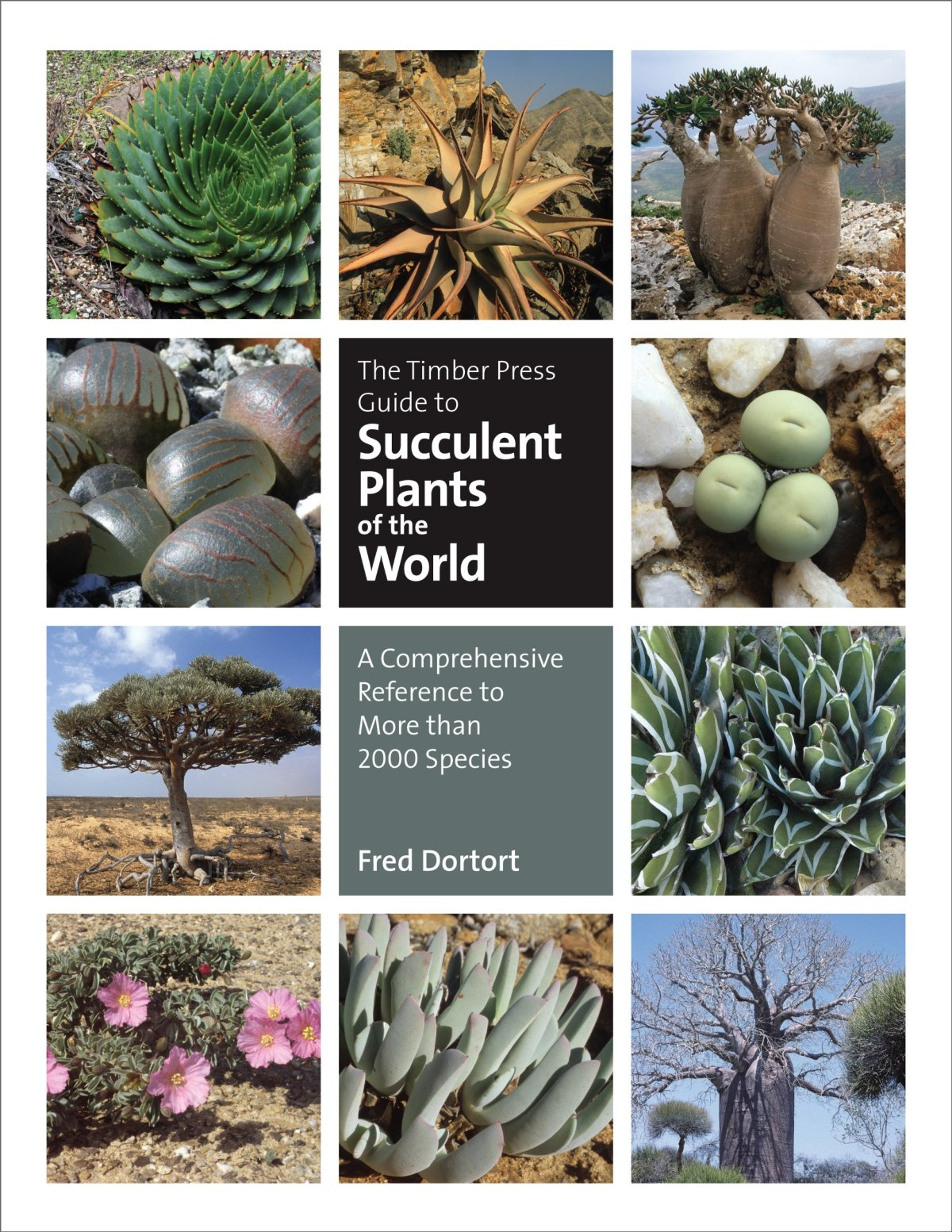 Succulent Plants of the World