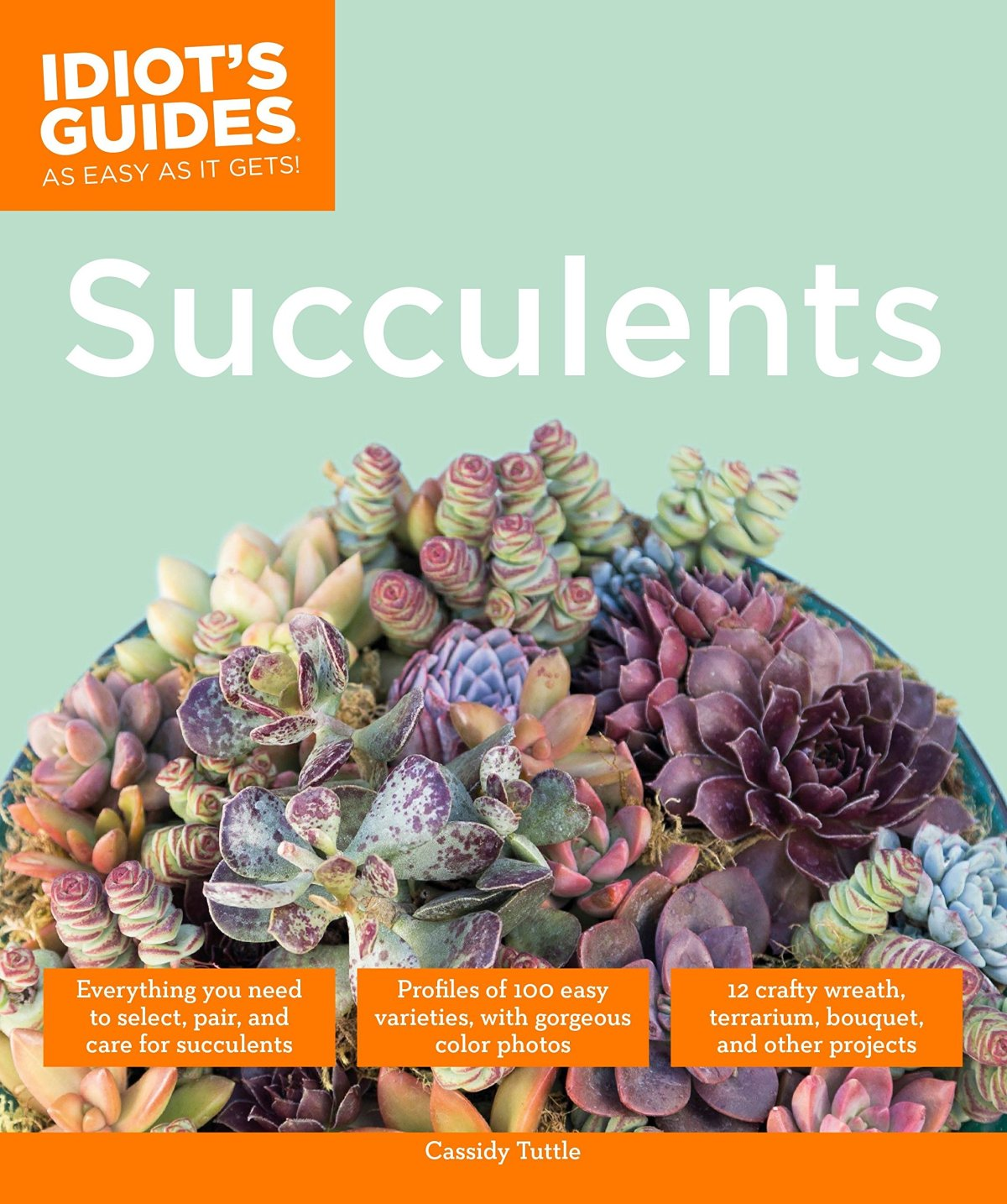 Succulents - Idiot's Guide