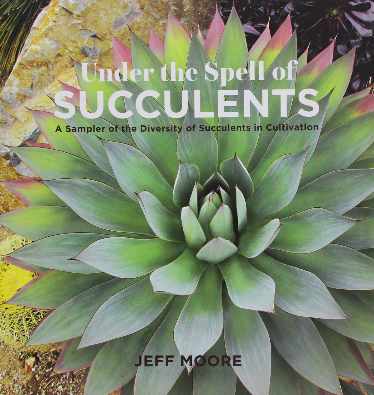 Under the Spell of Succulents