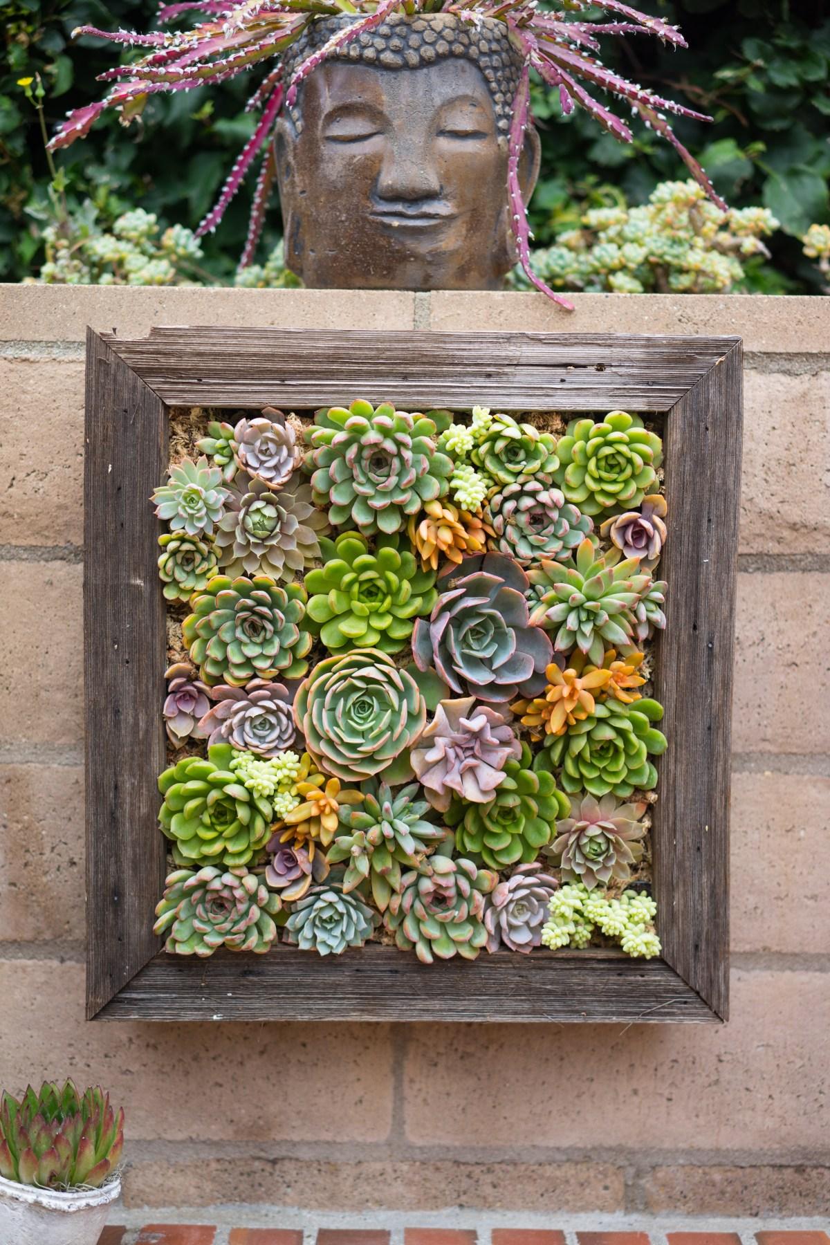 Dalla Vita Vertical Succulent Garden