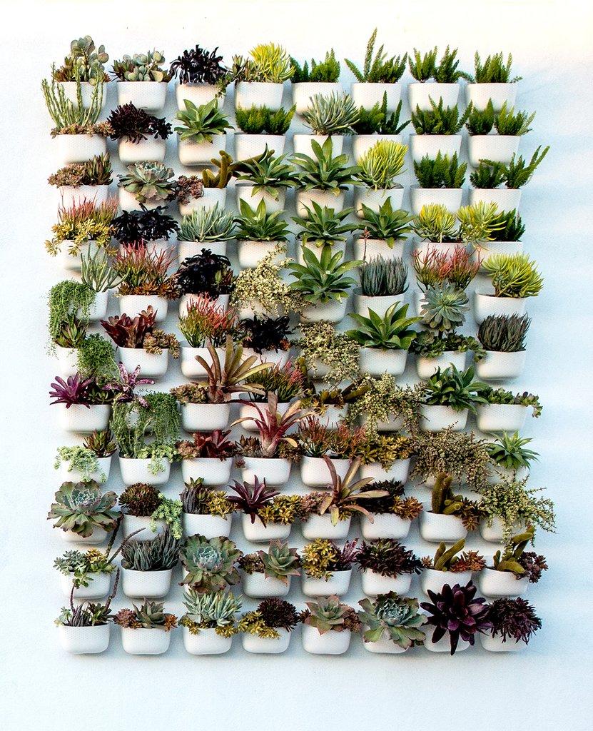 13 Outdoor Succulent Wall Garden Ideas - Dalla Vita on Outdoor Garden Wall Ideas id=86698