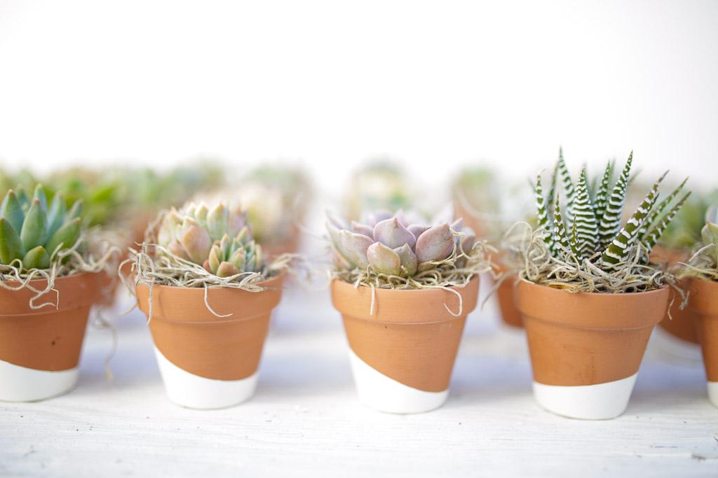 DIY Dipped Terra Cotta Succulent Favors - Dalla Vita
