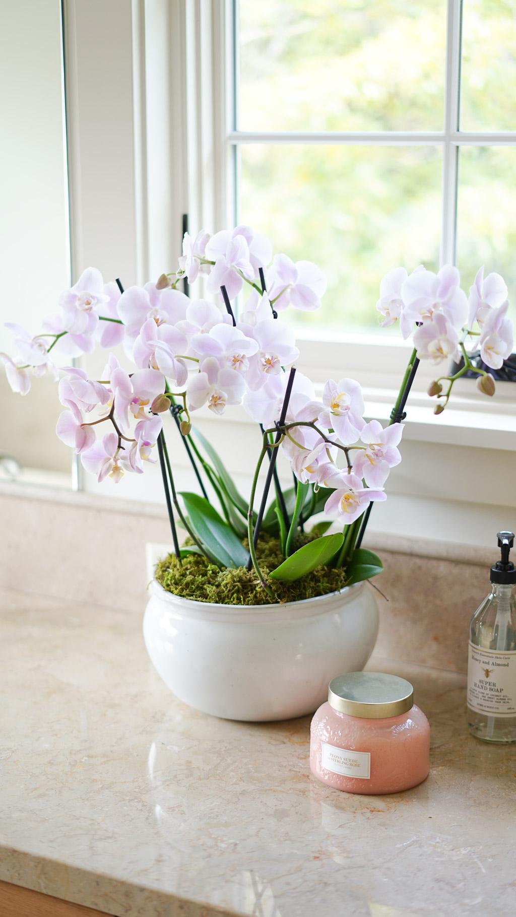 Light Pink Orchid Arrangement