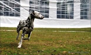 DalmatianDelights122NHEriksen