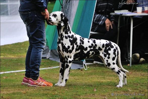 DalmatianDelights142NHEriksen