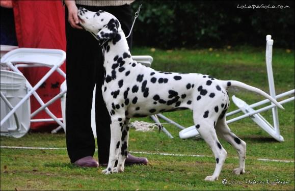 DalmatianDelights155NHEriksen
