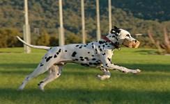 Bruks og hundesport