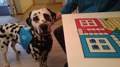 Petter er terapihund (Eier: Trine Mostrøm)