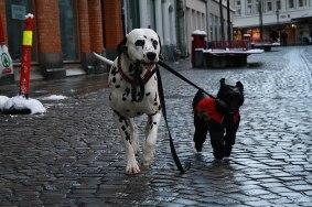 Nico (Lovinda's Johnny Cash) lufter venninnen sin