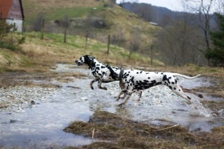 Toot's Make Me Smile - Pepper Running Spot's Clumsy Princess - Ipa Foto: Cathrine Rasmussen