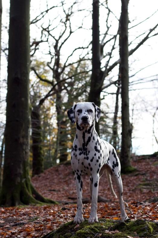 Running Spot's Clumsy Princess - Ipa Foto: Cathrine Rasmussen